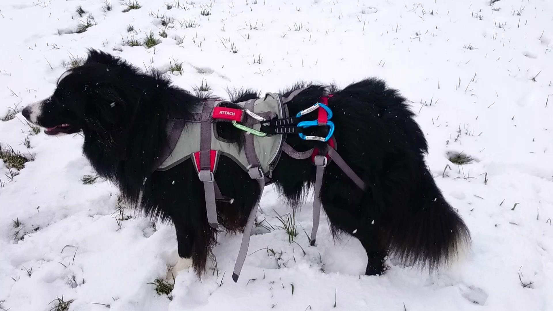 Klettergurt Hund : Double back harness hunde abseil klettergeschirr outsidestories