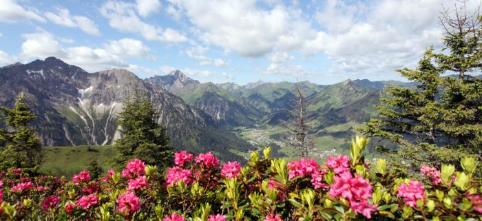 Bienen brauchen Blüten. DIe gibt es im Kleinwalsertal. Foto: KWT/Frank Drechsel