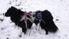 Double Back Harness - Hunde Abseil-Klettergeschirr